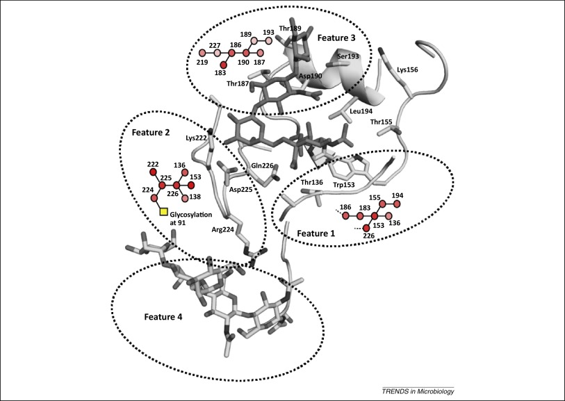 Glycan Receptor Specificity As A Useful Tool For Characterization