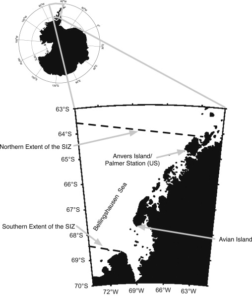 The Effects Of Variability In Antarctic Krill Euphausia Superba
