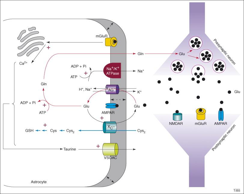 The undertow of sulfur metabolism on glutamatergic neurotransmission