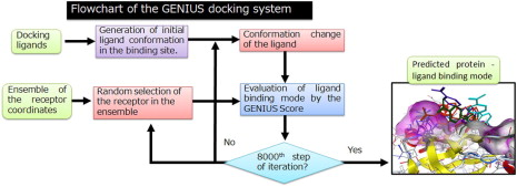 A new method for induced fit docking (genius) and its application to