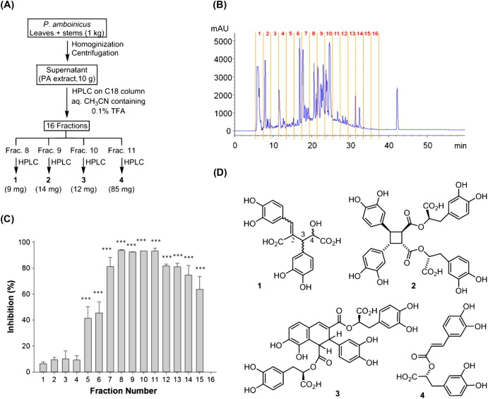 Chemical constituents of Plectranthus amboinicus and the