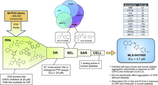 Perspective: Tyrosine phosphatases as novel targets for