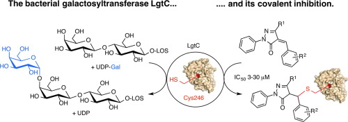 Covalent inhibitors of lgtc a blueprint for the discovery of non graphical abstract malvernweather Image collections