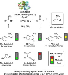 Mapping the substrate scope of monoamine oxidase (MAO-N) as a synthetic tool for the enantioselective synthesis of chiral amines