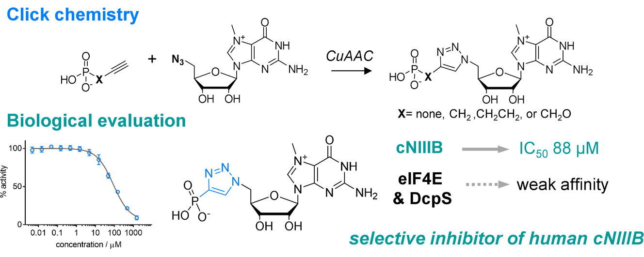7-Methylguanosine monophosphate analogues with 5′-(1,2,3-triazoyl) moiety: Synthesis and evaluation as the inhibitors of cNIIIB nucleotidase