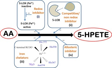 5-Lipoxygenase as a drug target: A review on trends in