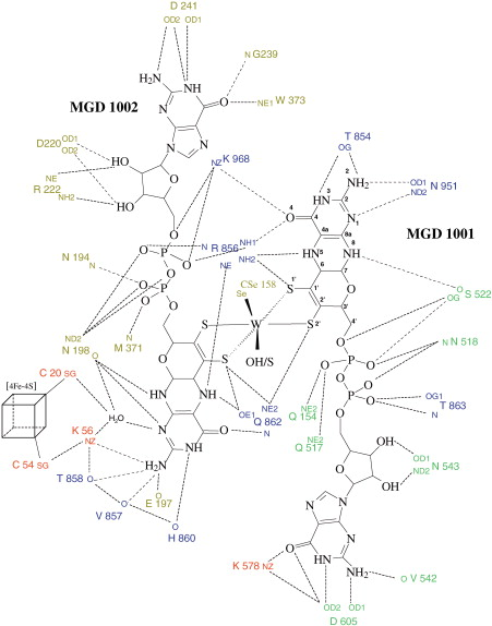 Gene Sequence And The 1 8 Crystal Structure Of The Tungsten