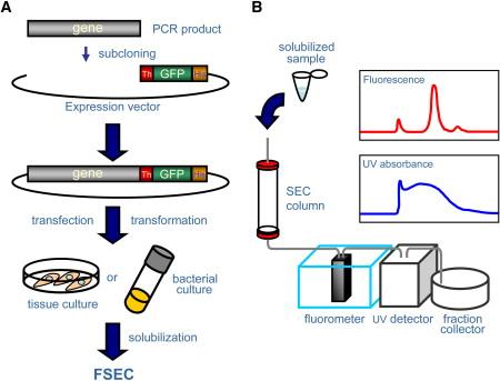 size exclusion chromatography