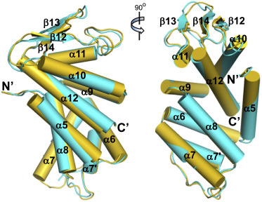Structures of the Gasdermin D C-Terminal Domains Reveal