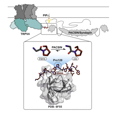 Structural Basis of TRPV4 N Terminus Interaction with