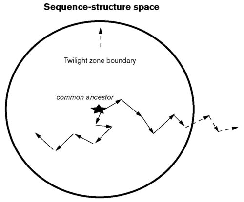 A structural explanation for the twilight zone of protein