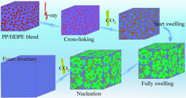 Supercritical CO2 foaming of radiation crosslinked polypropylene/high-density  polyethylene blend: Cell structure and tensile property - ScienceDirect
