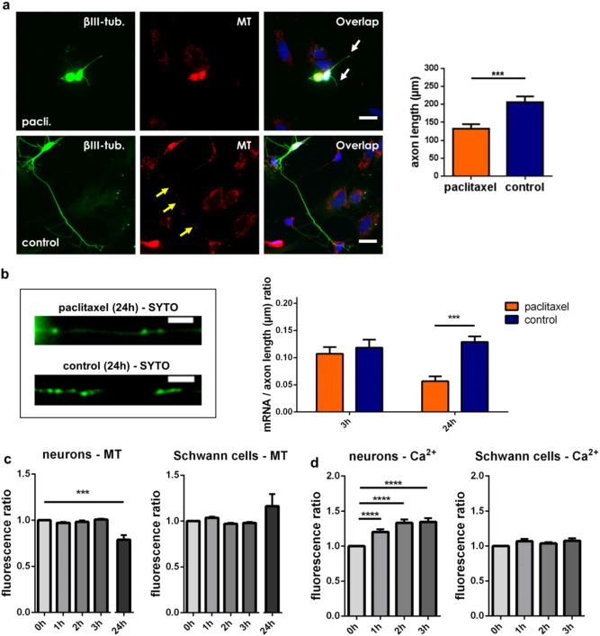 Paclitaxel inhibits mRNA transport in axons - ScienceDirect