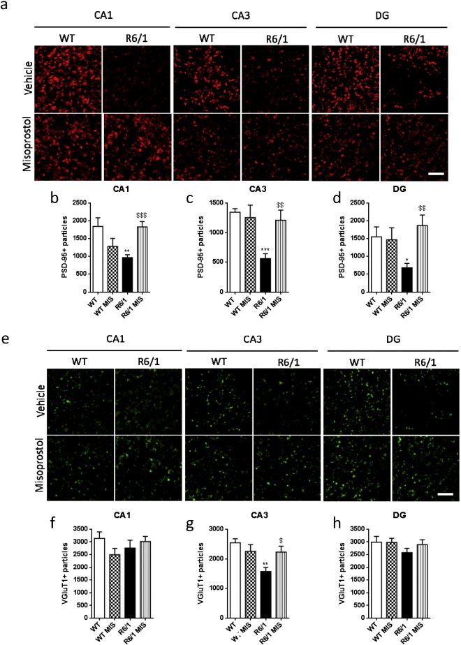 Prostaglandin E2 EP2 activation reduces memory decline in R6