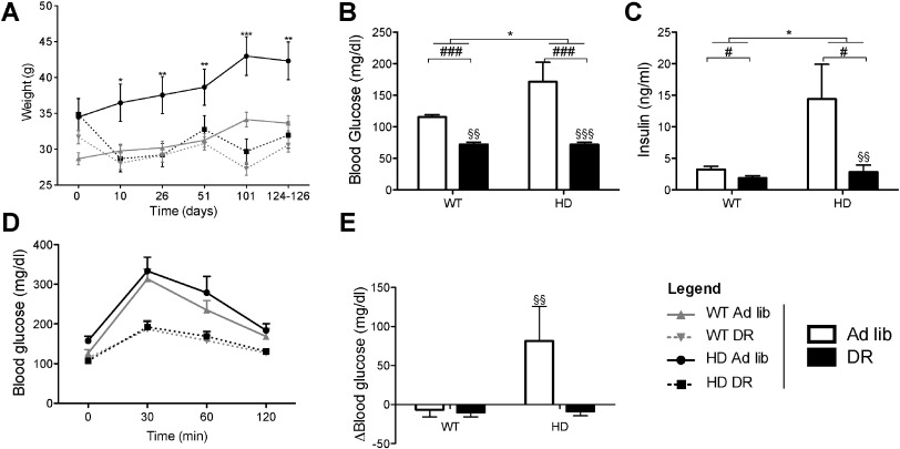Protection by dietary restriction in the YAC128 mouse model