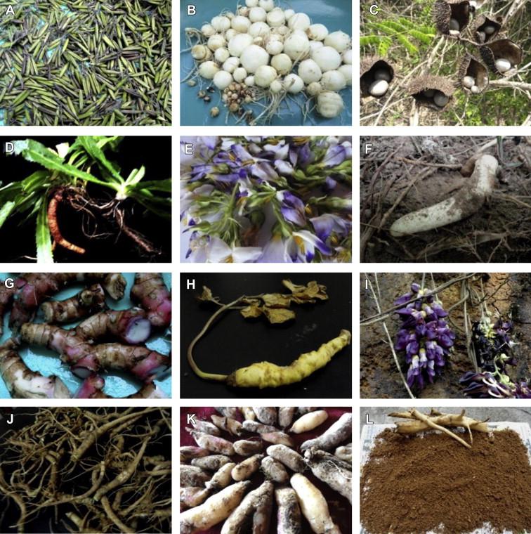 Ethnopharmacological survey of traditional medicinal plants