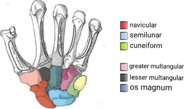 Musculoskeletal etymology: What's in a name? - ScienceDirect