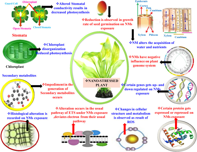 An overview on manufactured nanoparticles in plants: Uptake