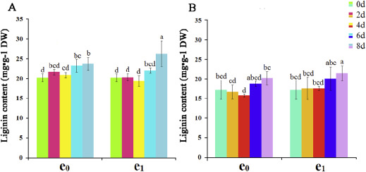 Elevated CO2 induces alteration in lignin accumulation in