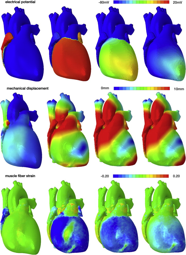 The Living Heart Project: A robust and integrative simulator for