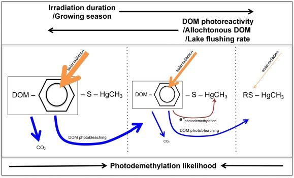 Assessing The Utility Of Dissolved Organic Matter Photoreactivity As