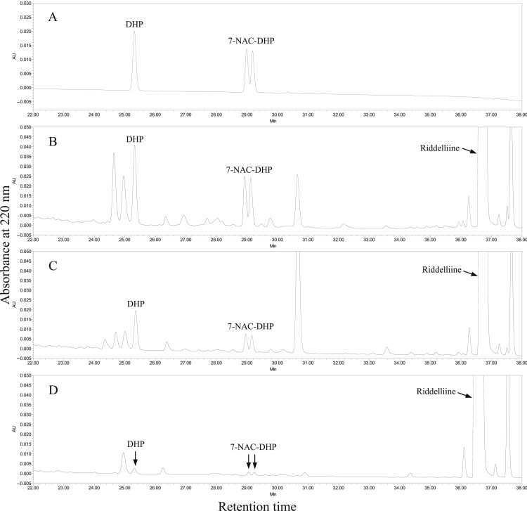 7-N-Acetylcysteine-pyrrole conjugate—A potent DNA reactive