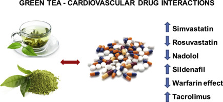 Update of green tea interactions with cardiovascular drugs