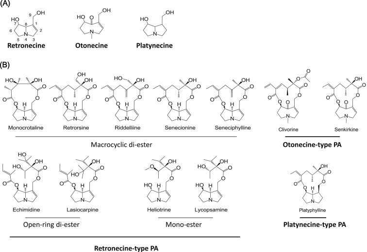 Pyrrole-protein adducts – A biomarker of pyrrolizidine