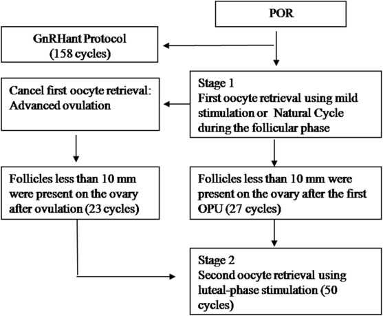 Luteal-phase ovarian stimulation is a feasible method for