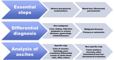Update On The Differential Diagnosis Of Gynecologic Organ Related Diseases In Women Presenting With Ascites Sciencedirect