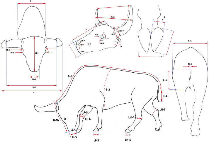 The Yukagir Bison The Exterior Morphology Of A Complete Frozen