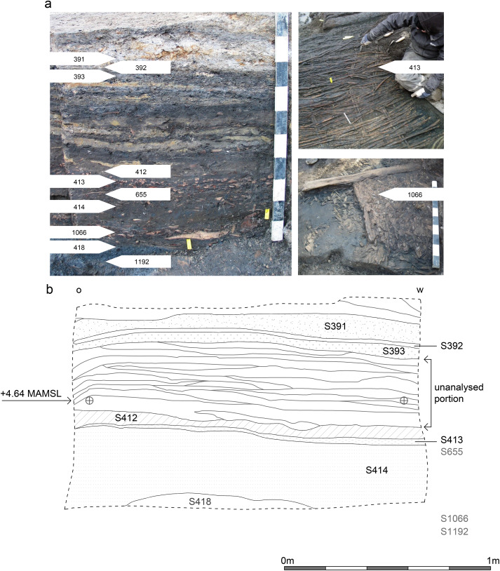 Environmental evidence from early urban Antwerp: New data from ...