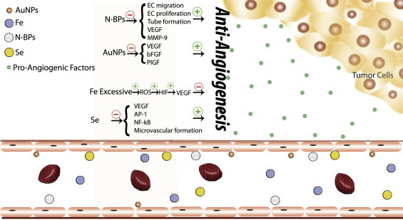 Functional role of inorganic trace elements in angiogenesis