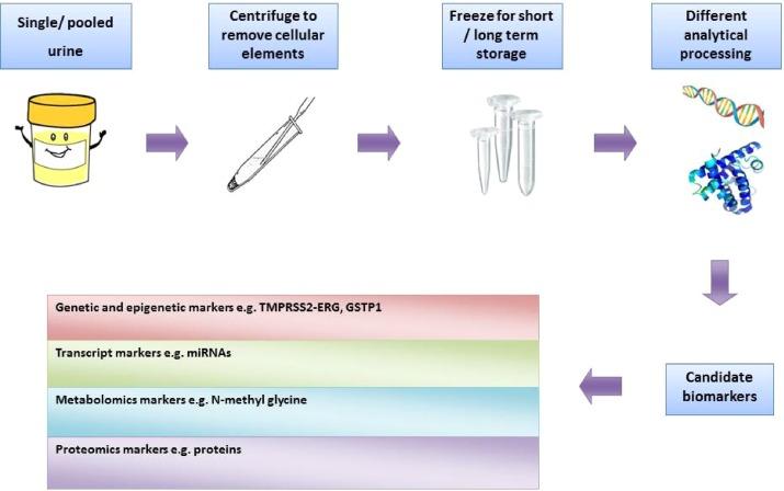 urine test for prostate cancer markers