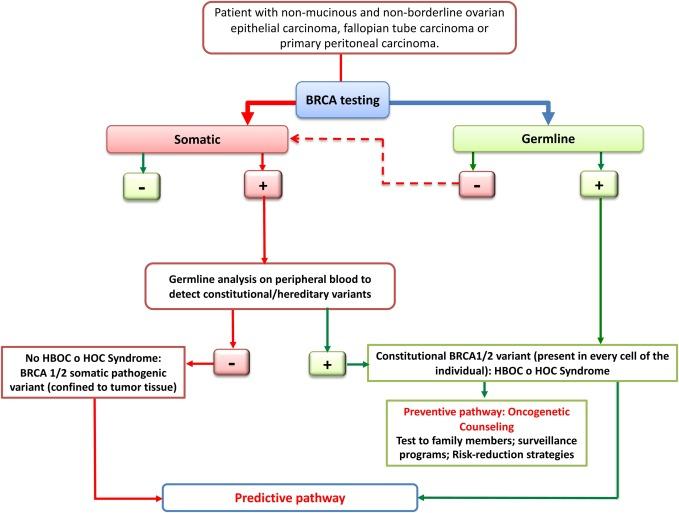 Mutații BRCA1 și BRCA2 - cancer ereditar sân/ovar (analiza) - Synevo