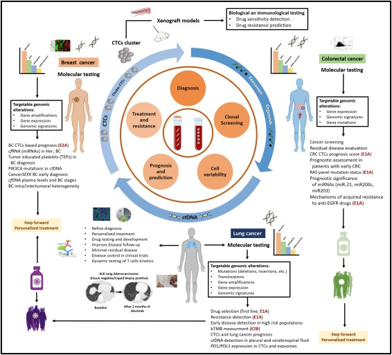 Challenges And Opportunities Of Cfdna Analysis Implementation In Clinical Practice Perspective Of The International Society Of Liquid Biopsy Islb Sciencedirect