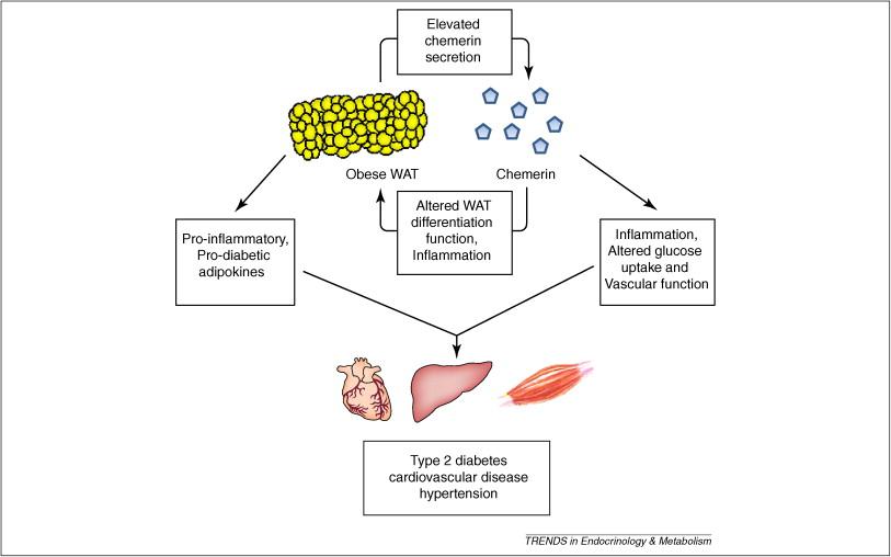 Disorders of metabolism. (subject 9) online presentation.