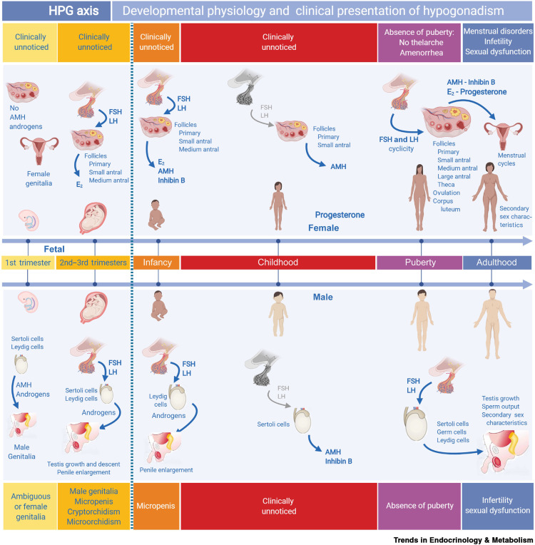Hypogonadism in Pediatric Health: Adult Medicine Concepts