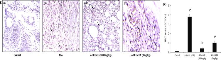 Majoon ushba, a polyherbal compound ameliorates rheumatoid arthritis