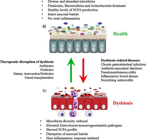 dysbiosis diarrhea)