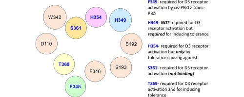 Identification of key residues involved in the activation and