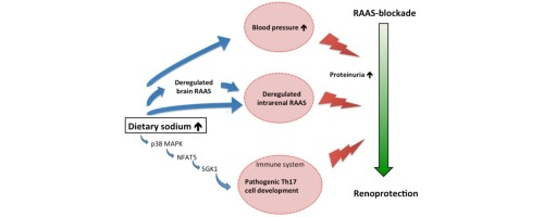Sodium Intake Raas Blockade And Progressive Renal Disease Sciencedirect