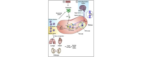 Diagnostic Tests for Agents of Community-Acquired Pneumonia ...