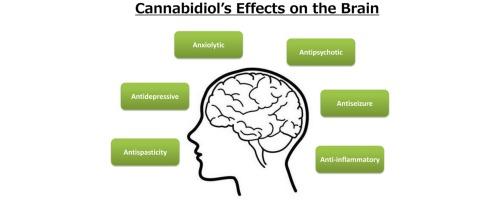 cannabidiol in medical marijuana research vistas and potential
