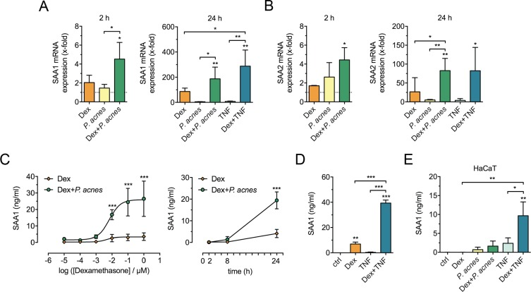 854037d1 Glucocorticoids and Toll-like receptor 2 cooperatively induce acute ...