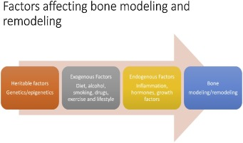 Epigenetic regulation of bone remodeling by natural compounds