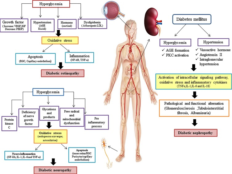 Therapeutic potential of curcumin in diabetic complications