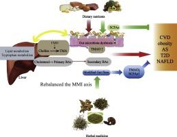 "Using herbal medicine to target the ""microbiota-metabolism"