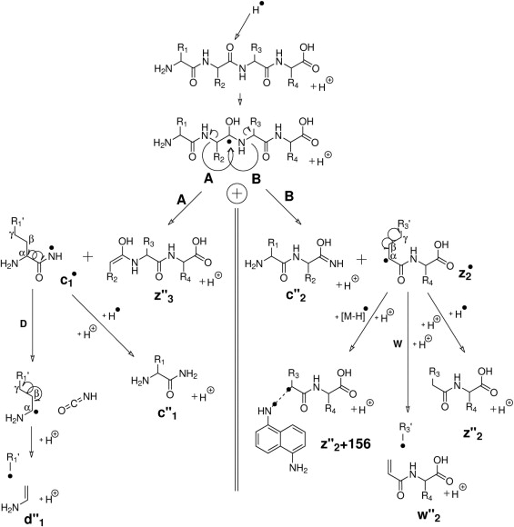 New Advances In The Understanding Of The In Source Decay