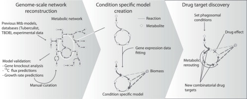 Systems-level modeling of mycobacterial metabolism for the